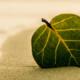 seychelles-sustainable