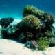 korallen-seychellen
